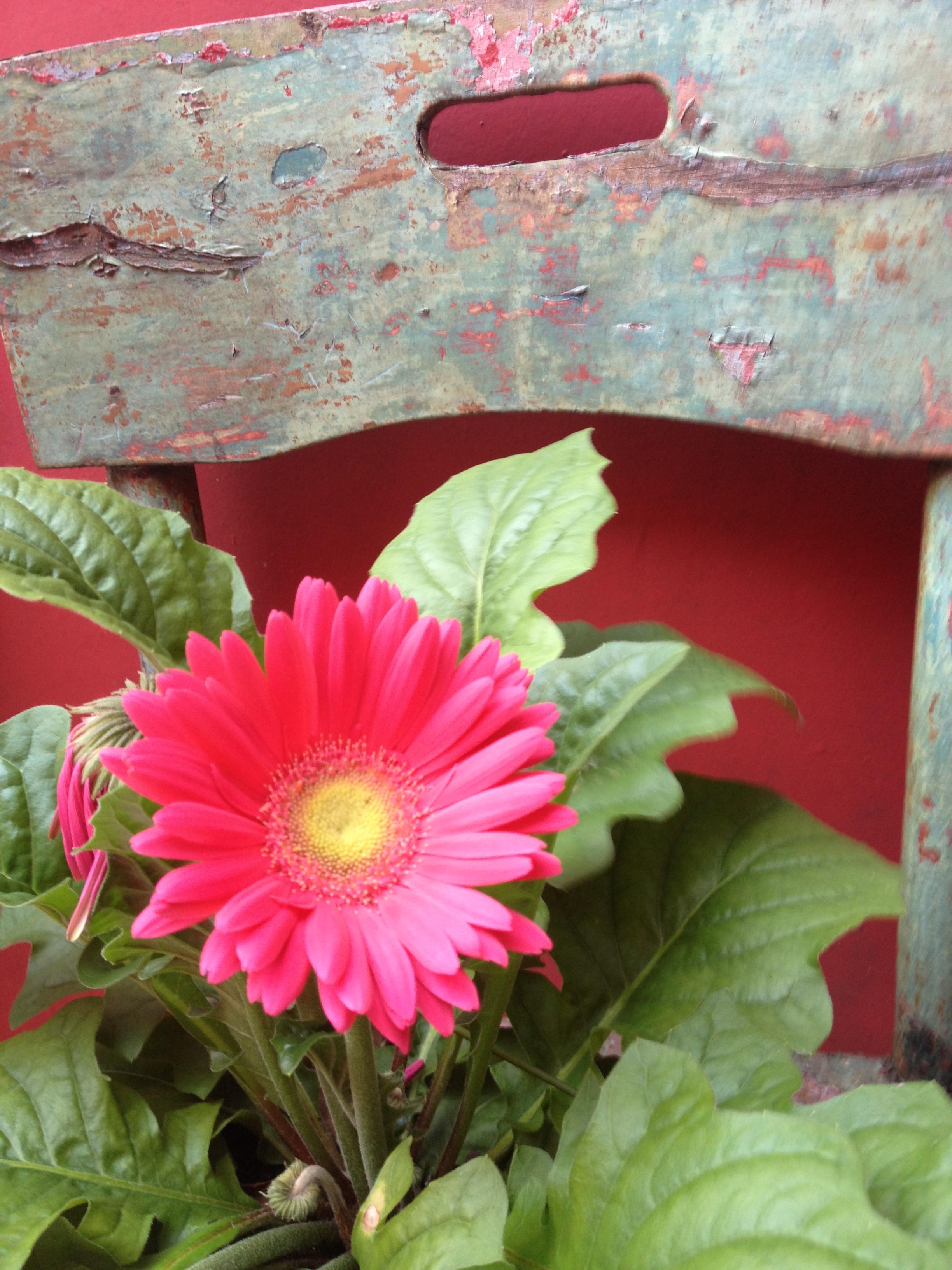 de Setembro a Abril e rego todos os dias E aqui na versão rosa